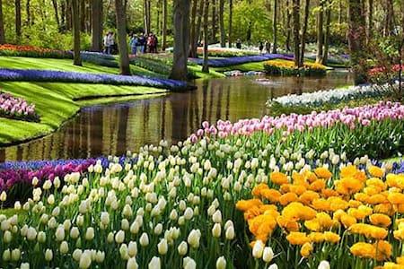 Near Amsterdam, Haarlem en Leiden - Hoofddorp