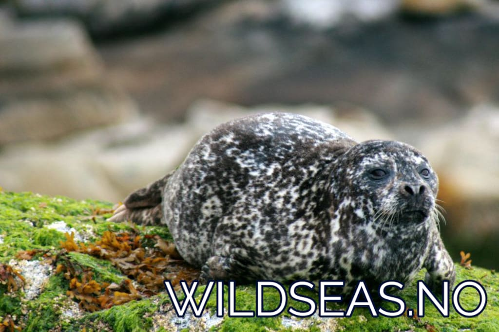 Experience the outdoors in comfort and style and enjoy one of the world's most amazing wildernesses with Wild Seas!