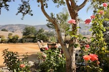 Santa Ynez Valley, Ranch House & Garden Oasis!