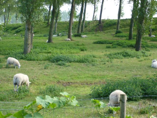 Wolphaartsdijk - Wolphaartsdijk - Tatil evi