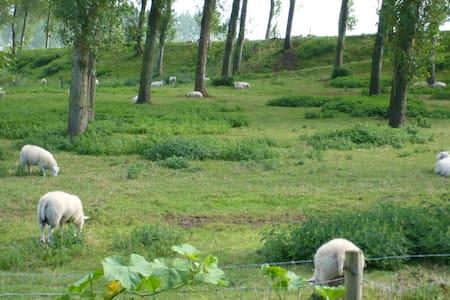 Wolphaartsdijk - Wolphaartsdijk - 度假屋