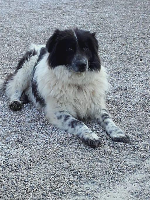 Unser Hund Balu