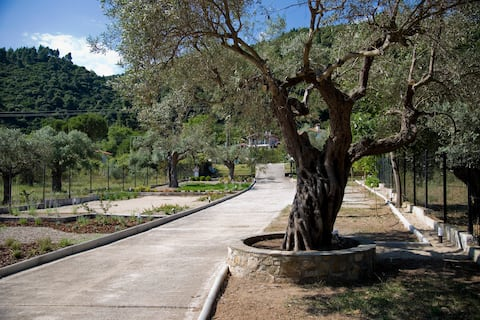 Olivegrove House 8