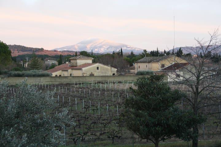 Nord Provence vers le Ventoux - Sainte-Cécile-les-Vignes - Guesthouse