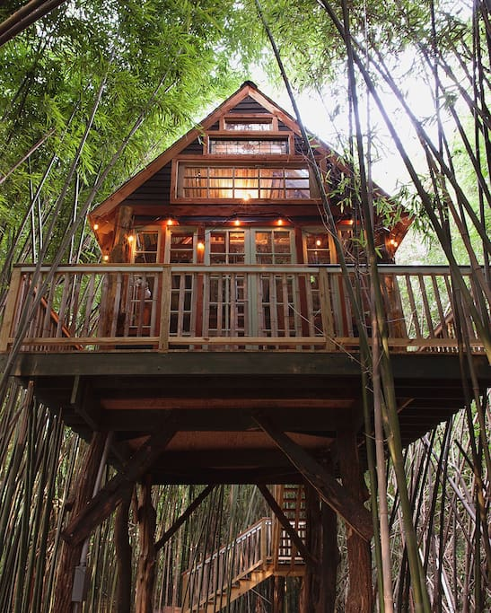 Treehouse Masters Irish Cottage atlanta alpaca treehouse in the bamboo forest - treehouses for