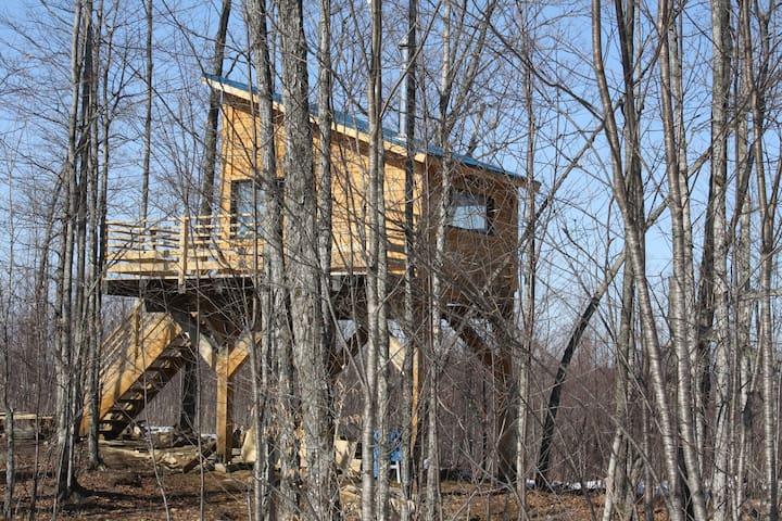 Cabane dans les arbres d'en haut