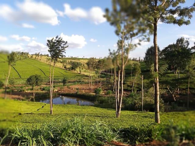 Od Kwé. A wellness place to Retreat & Recharge