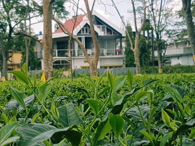 Go for a walk across the tea gardens or simply enjoy the view from your balcony