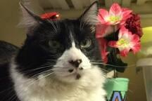 Teo, el gato mejor compañero en tu estadía.