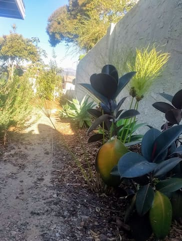 Entry path lined with natives and Mediterranean plants.