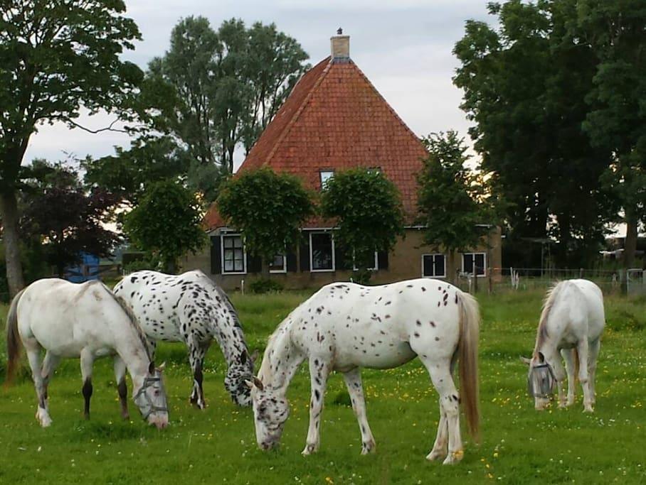 Voorkant van de boerderij met de paarden ervoor in het weiland