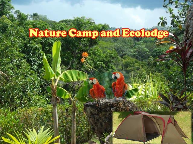 Yasipark - Nature Camp and Ecolodge T 1 - Yásica Arriba