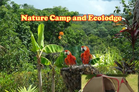 Yasipark - Nature Camp and Ecolodge T 1 - Tent