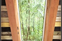 This is the view through the sleeping loft skylight of the swaying bamboo and loads of birds.