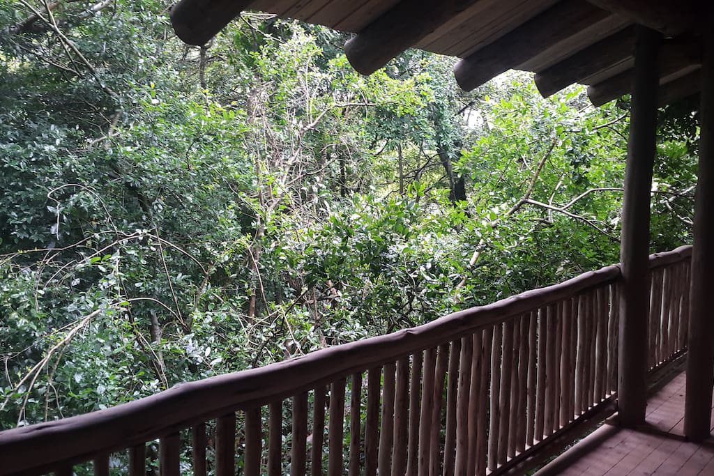 View into the treetops from the balcony