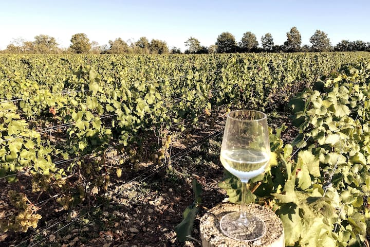 Private Vineyard & View at Hopyard House - Hillier