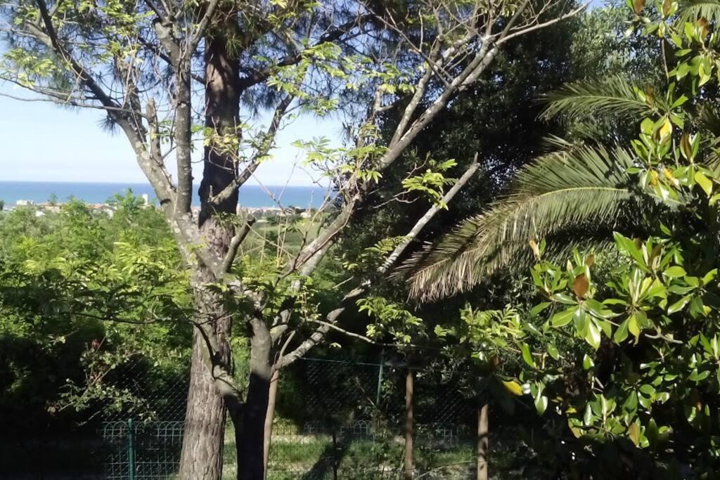 Vista giardino lato nord-est . Distanza tra la casa ed il mare. Sullo sfondo Porto Recanati.