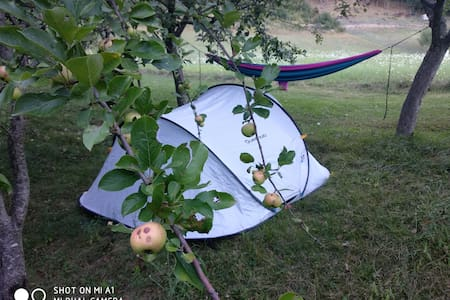 WILD Camping Site in an Italian Orchard