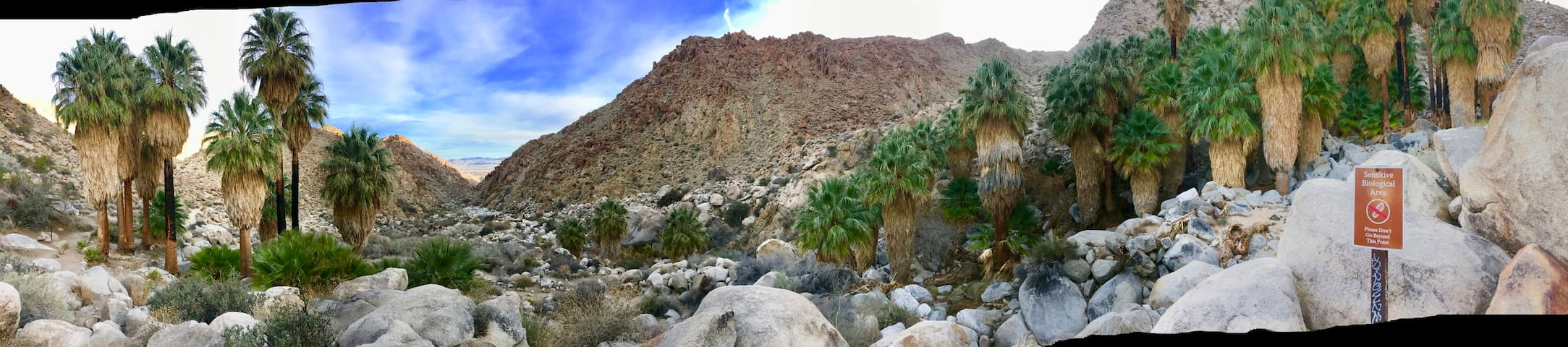 49 Palms Oasis favorite hike