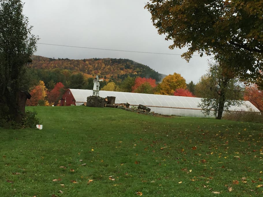 Our hoop house in the fall with the maples turninh & 35 acres to explore!
