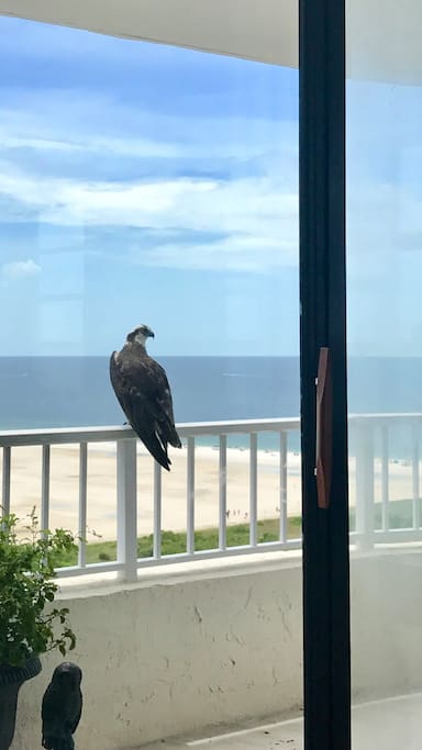 OSPERY CAME TO VISIT!