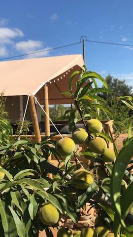 Heerlijke logde tent in buitengebied