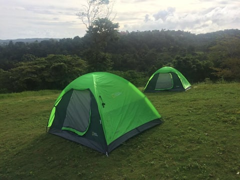 4 sml tents on Fern Forest Campsite, with a view