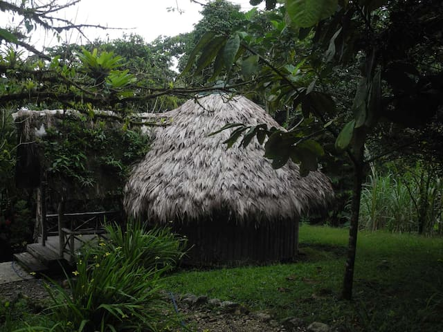 Palmhaus im Regenwald