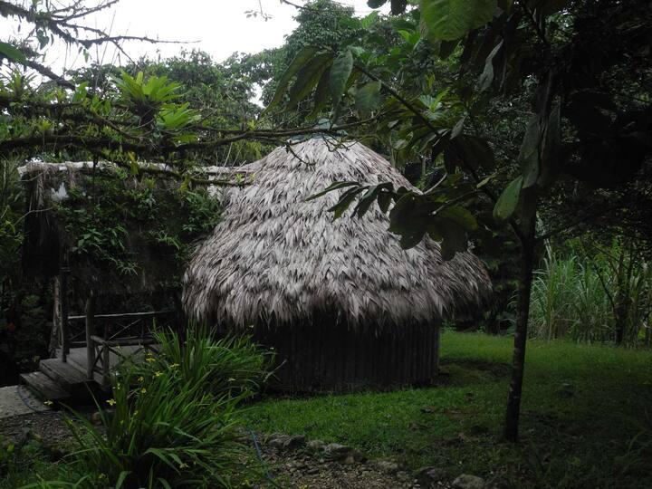 Wohnen im Regenwald mit einer Quellwasser Lagune