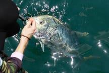 Mandorah Jetty - a game fishers paradise.  Queen fish, mackerel, barramundi, tuna, shark and other pelagic species are  regularly caught here (some are seasonal)