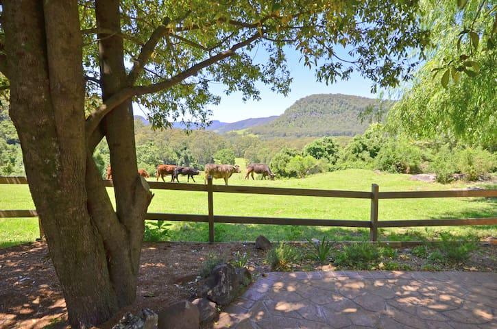 """Secrets"" at Cedar Grove, Kangaroo Valley"
