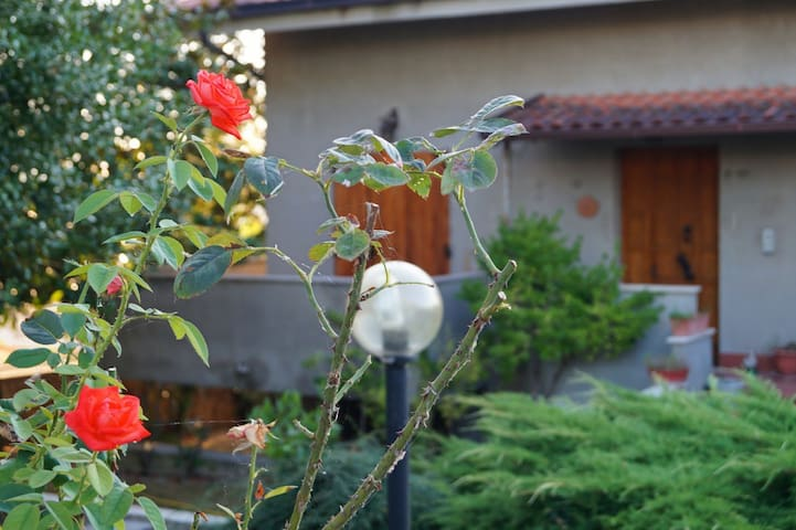 B&B Le Due Farfalle-La Matrimoniale - Ostra - Penzion (B&B)