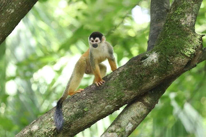 Four Monkeys  Eco Lodge Jungle & Beach - Titi