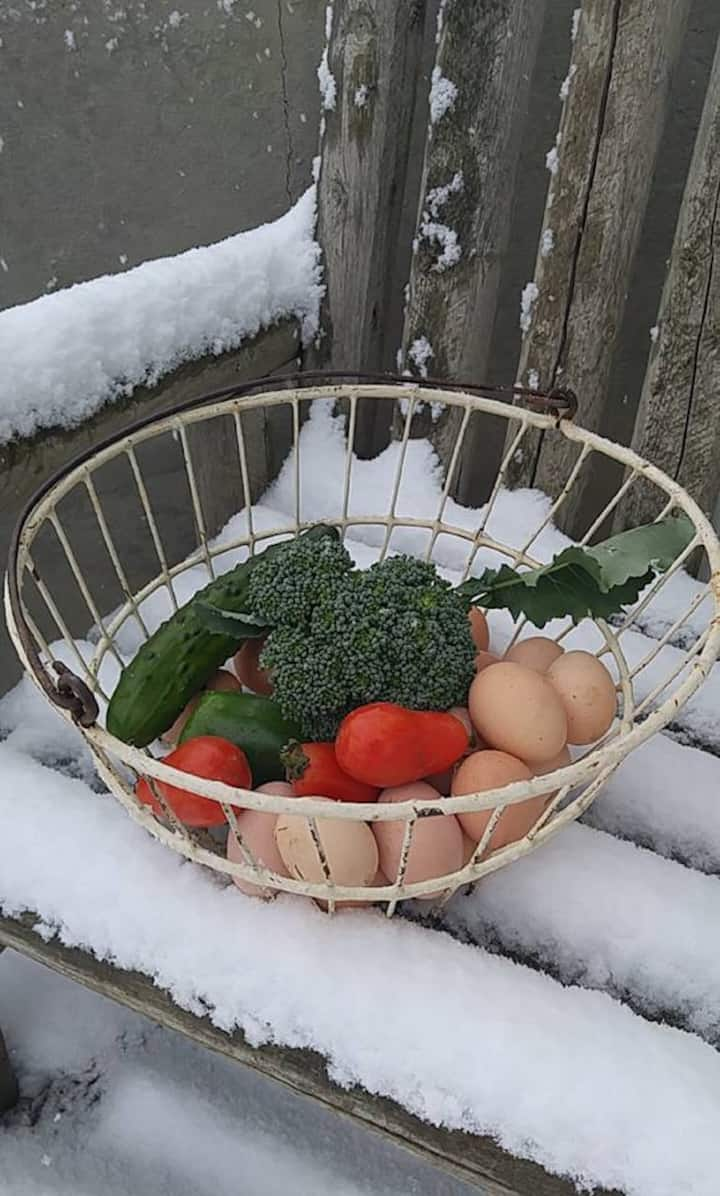 A delicious winter harvest!