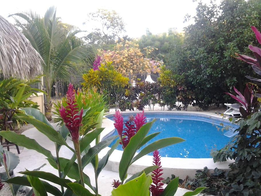 View towards the garden and pool