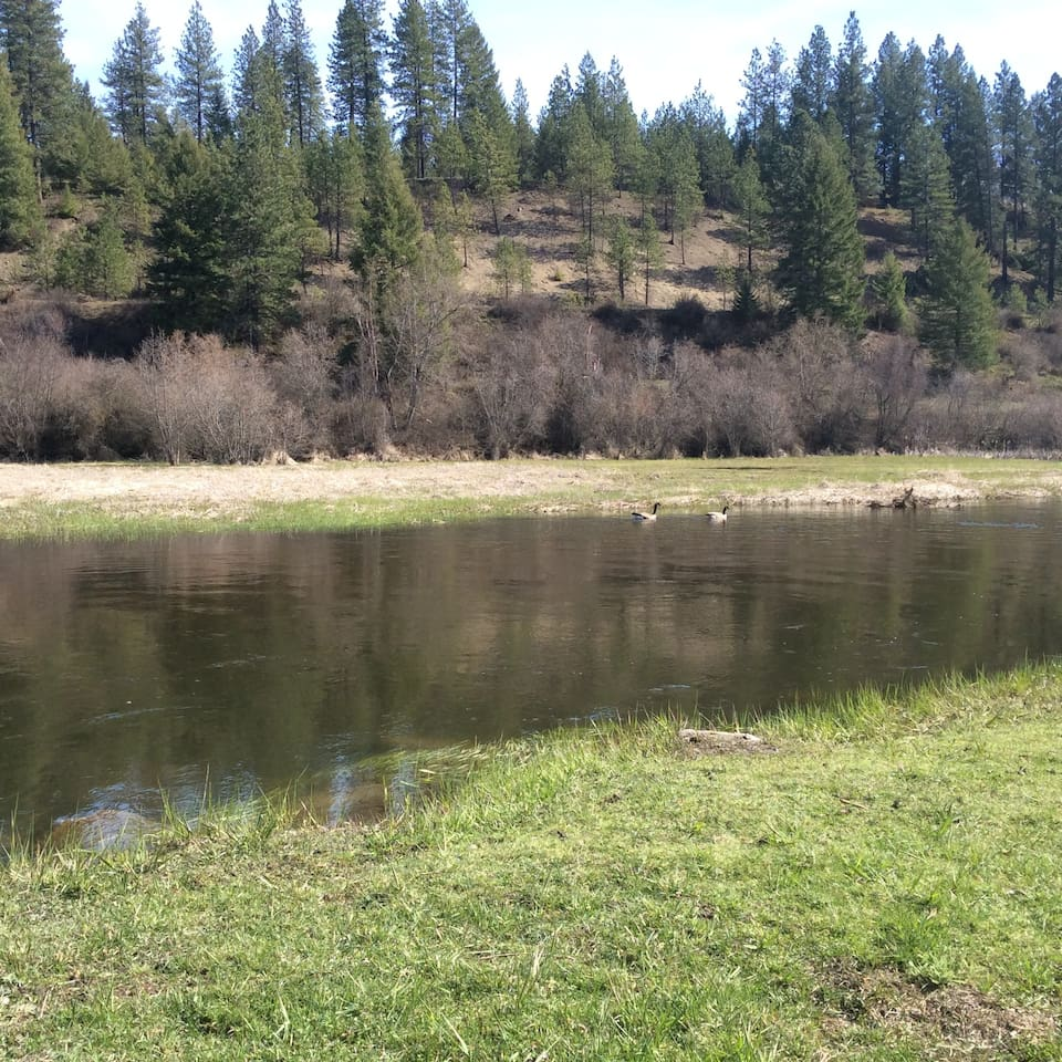 Little Spokane River - great for fishing, swimming, floating, wonderful sandy bottom - wildlife - we have eagles that nest nearby.