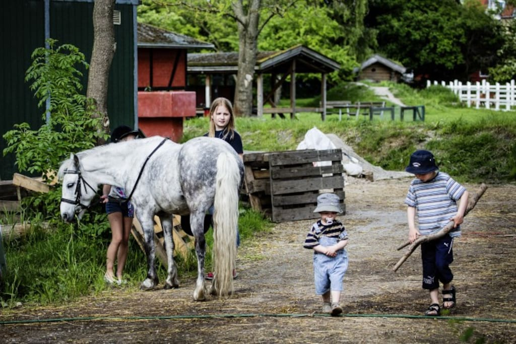 """The children's animal field (""""Børnenes Dyremark"""") Here you will find horses, rabbits, sheeps and chickens. Only 2 minutes walk from the house."""