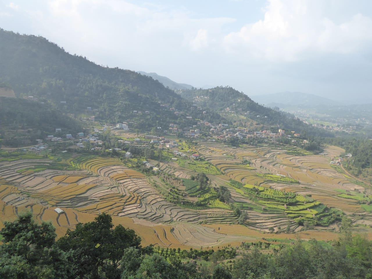 The scenario of the green fields