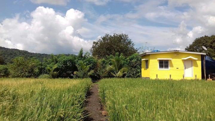 My Nest Agro Farm @  Karnala Forest - Panvel