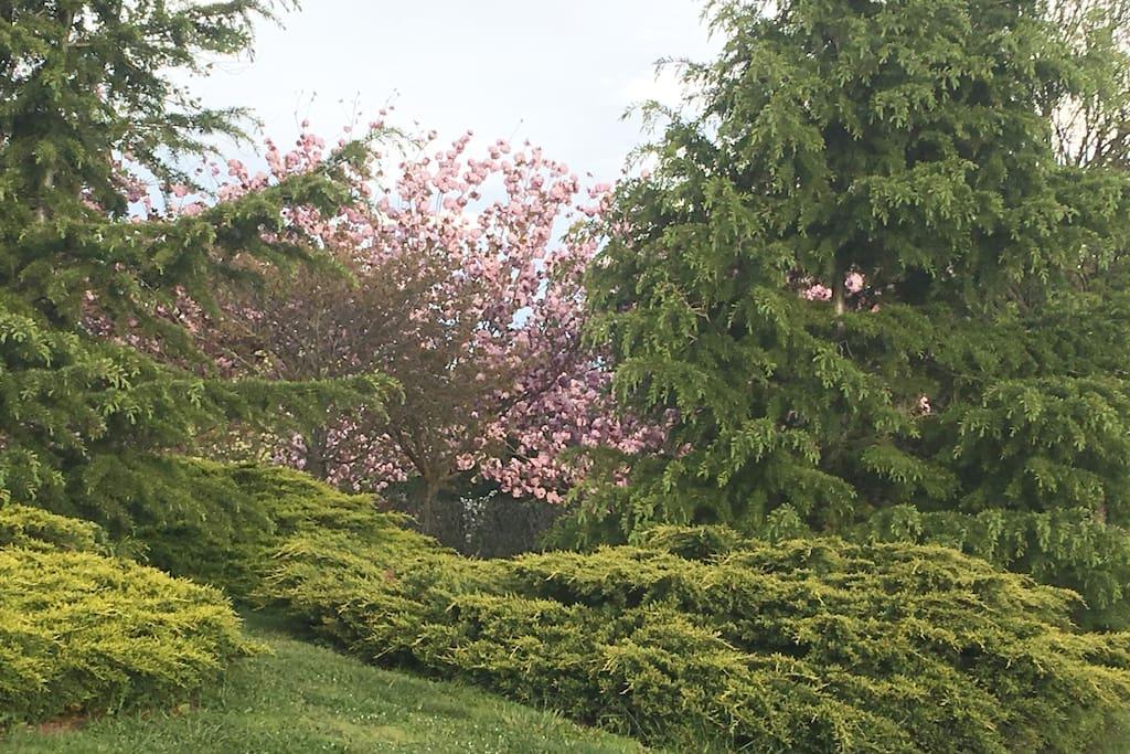Extensive mature gardens