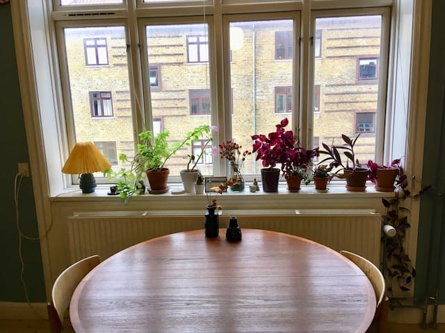 The window and the plants in the livingroom