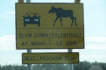 This is moose country!