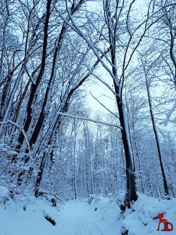 Devant la maison un jour de neige