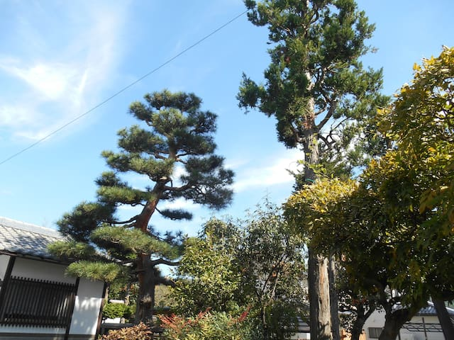森のハイジ in 松本 part 2 - Matsumoto-shi - Leilighet