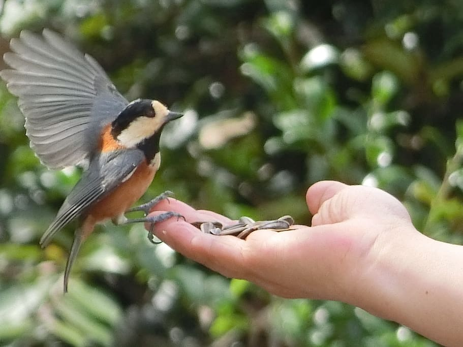 feeding little bird in the morning