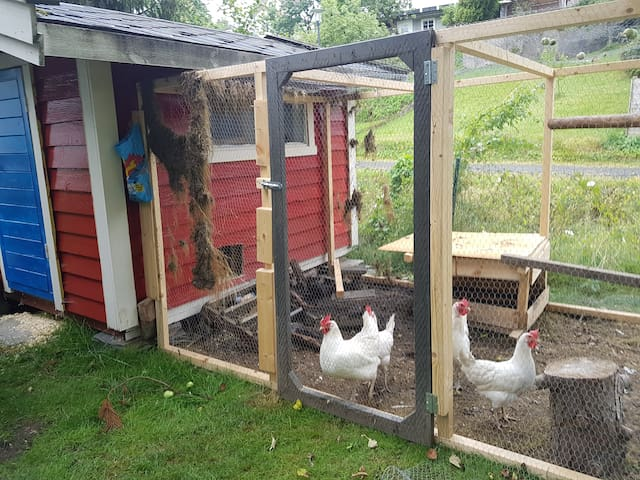We have chickens in the garden, you can say hi if you like :)