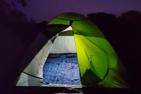 Camp under the stars!