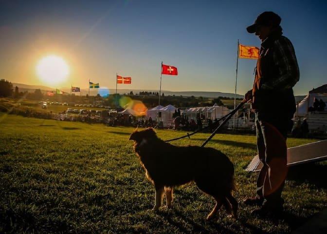 Meeker Sheepdog Trials - September