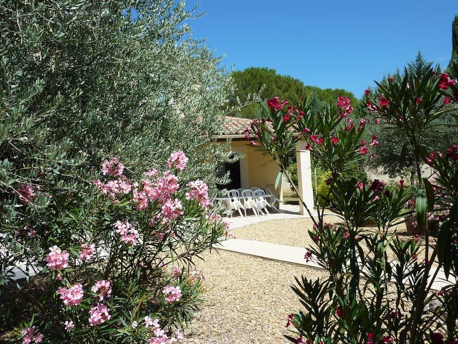 Villa au milieu des pins, oliviers et lauriers