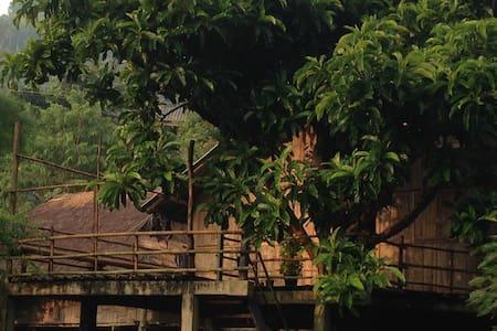 Tree House Homestay Akha